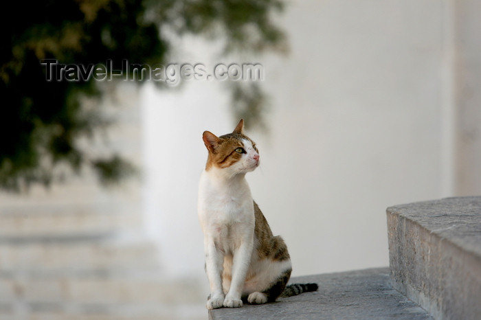 greece436: Greek islands - Dodecanes archipelago - Symi island - Panormitis - attentive cat - photo by A.Stepanenko - (c) Travel-Images.com - Stock Photography agency - Image Bank