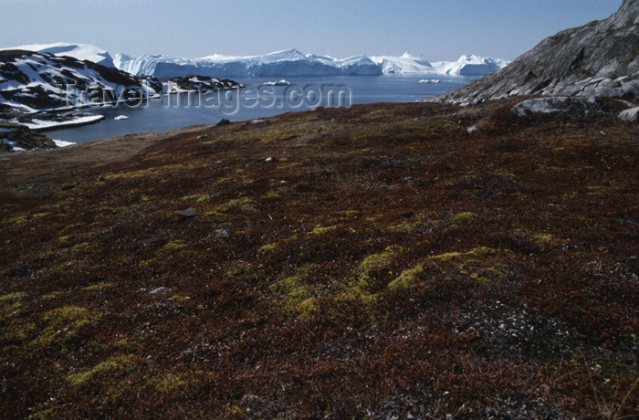 greenland56: Greenland - Illuisaat - Sermermiut, a grass-covered broad ravine - place of an early Eskimo settlement - photo by W.Allgower - (c) Travel-Images.com - Stock Photography agency - Image Bank