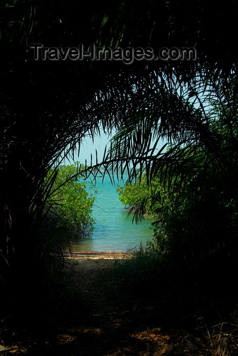 guinea-bissau123: Rubane Island, Bijagós Archipelago - UNESCO biosphere reserve, Bubaque sector, Bolama region, Guinea Bissau / Guiné Bissau: beach cove, tunnel effect through palm trees / enseada na praia, palmeiras - photo by R.V.Lopes - (c) Travel-Images.com - Stock Photography agency - Image Bank
