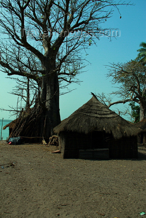 guinea-bissau135: Rubane Island, Bijagós Archipelago - UNESCO biosphere reserve, Bubaque sector, Bolama region, Guinea Bissau / Guiné Bissau: village scene - wooden huts with thatched roofs, baobabs / aldeia com embondeiros, cubatas de madeira e palha, vida quotidiana - photo by R.V.Lopes - (c) Travel-Images.com - Stock Photography agency - Image Bank