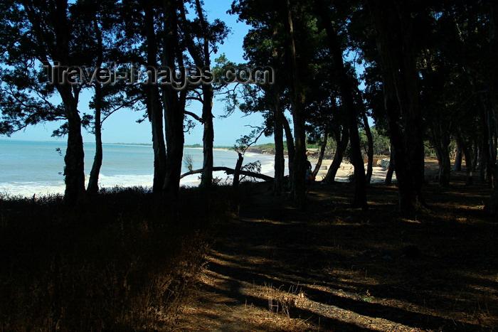 guinea-bissau173: Praia de Varela / Varela beach, Cacheu region, Guinea Bissau / Guiné Bissau: View from the beach between the trees / vista da praia por entre as árvores e as sombras - photo by R.V.Lopes - (c) Travel-Images.com - Stock Photography agency - Image Bank