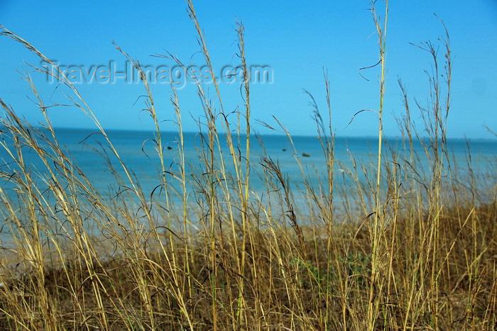 guinea-bissau176: Praia de Varela / Varela beach, Cacheu region, Guinea Bissau / Guiné Bissau: View from the beach - tall grass / paisagem da praia - erva alta - photo by R.V.Lopes - (c) Travel-Images.com - Stock Photography agency - Image Bank
