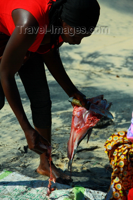 guinea-bissau182: Praia de Varela / Varela beach, Cacheu region, Guinea Bissau / Guiné Bissau: Women gutting fish / Mulher a arranjar o peixe - photo by R.V.Lopes - (c) Travel-Images.com - Stock Photography agency - Image Bank