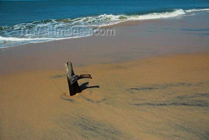 guinea-bissau189: Praia de Varela / Varela beach, Cacheu region, Guinea Bissau / Guiné Bissau: dead trunk beach / paisagem da praia - árvore morta - photo by R.V.Lopes - (c) Travel-Images.com - Stock Photography agency - Image Bank