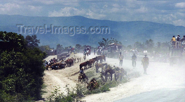 haiti25: Haiti - Cap-Haitien: donkey park next to the country market (photo by G.Frysinger) - (c) Travel-Images.com - Stock Photography agency - Image Bank
