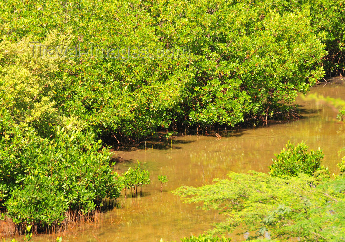 haiti79: Fort-Liberté, Nord-Est Department, Haiti: mangroves along the bay - photo by M.Torres - (c) Travel-Images.com - Stock Photography agency - Image Bank