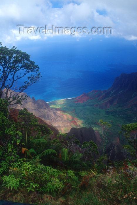 hawaii1: Hawaii - Kauai Island: Na Pali coast: Hawaiian Islands with flora in foreground and ocean in background - Hawaiian Islands - photo by D.Smith - (c) Travel-Images.com - Stock Photography agency - Image Bank
