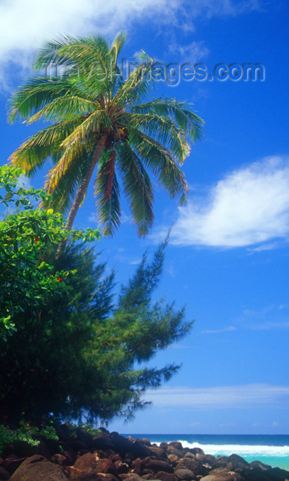hawaii3: Hawaii - Kauai Island: Hanalei: palm tree and beach - Hawaiian Islands - photo by D.Smith - (c) Travel-Images.com - Stock Photography agency - Image Bank