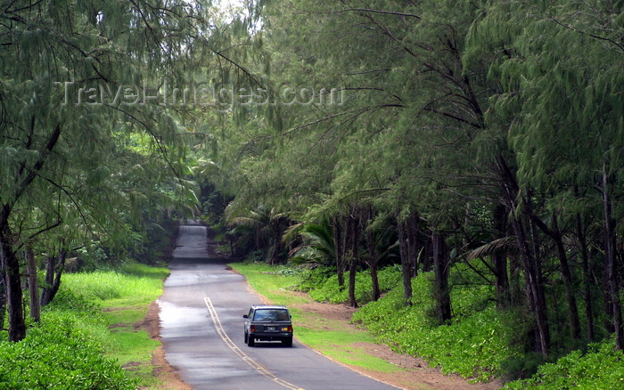 hawaii48: Hawaii Island - Puna District.: road and forest - the SE corner of the Big Island contains remnants of a lush tropical rainforest, though much has been destroyed by volcanic activity and agriculture - photo by R.Eime - (c) Travel-Images.com - Stock Photography agency - Image Bank