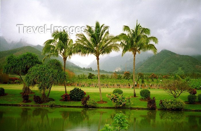 hawaii69: Hawaii - Maui island: three palms - Photo by G.Friedman - (c) Travel-Images.com - Stock Photography agency - Image Bank