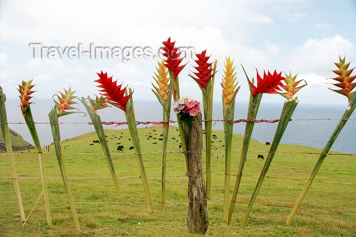 hawaii70: Hawaii - Maui island: flowers on a fence - Heliconias - Photo by G.Friedman - (c) Travel-Images.com - Stock Photography agency - Image Bank