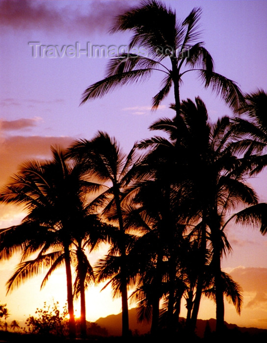 hawaii78: Hawaii - Maui island: palms at sunset - Photo by G.Friedman - (c) Travel-Images.com - Stock Photography agency - Image Bank
