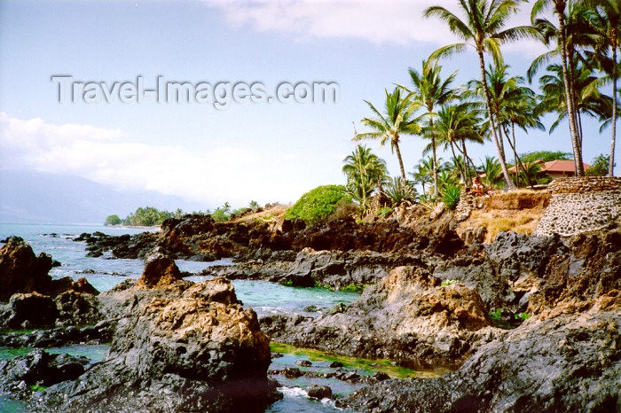 hawaii80: Hawaii - Maui island: leaves - Photo by G.Friedman - (c) Travel-Images.com - Stock Photography agency - Image Bank