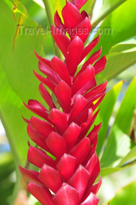 Honduras Flower Flowers Ideas For Review