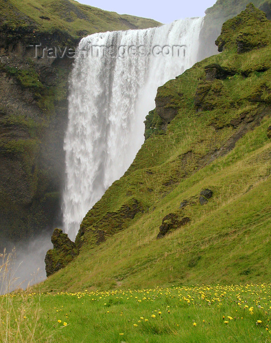 Iceland Skogafoss and wildflowers (photo by B.Cain)