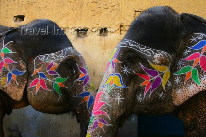 india1: Jaipur / JAI , Rajasthan, India: painted elephants - head decoration - photo by M.Wright - (c) Travel-Images.com - Stock Photography agency - Image Bank