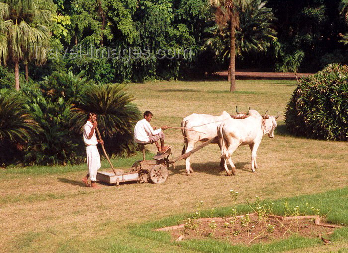 india17: India - Agra (Uttar Pradesh): Lawn mowing hindustani style (photo by Miguel Torres) - (c) Travel-Images.com - Stock Photography agency - Image Bank