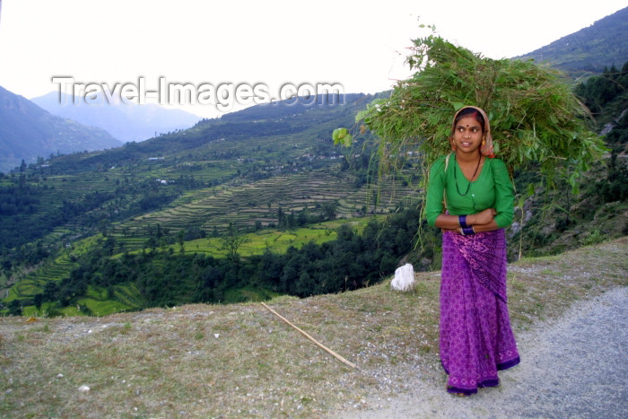 india236: India - Gupt Kashi village (Uttaranchal): young woman gathers grass for stock feed (photo by Rod Eime) - (c) Travel-Images.com - Stock Photography agency - Image Bank