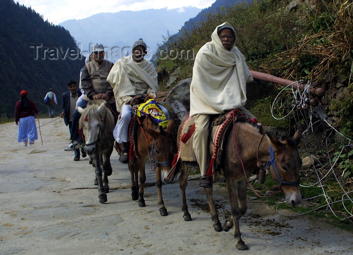 india242: India - Kedarnath (Uttaranchal): Hindu pilgrims on horseback (photo by Rod Eime) - (c) Travel-Images.com - Stock Photography agency - Image Bank