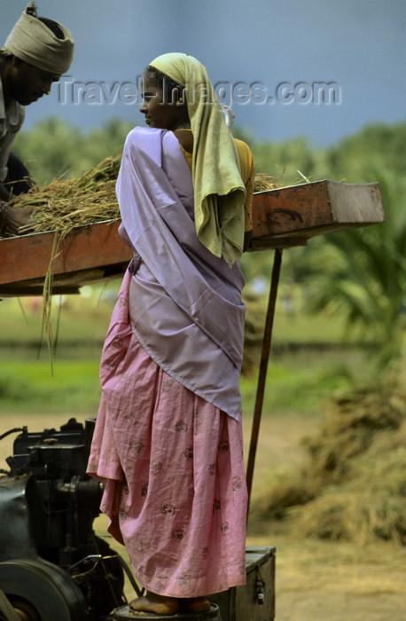 india309: South India: rice harvest - photo by W.Allgöwer  Reisanbau: Im letzten Arbeitsgang des Reisanbaus erfolgt nach etwa vier bis sechs Monaten Trockenlegung der Felder und Ernte mit Hand-Sicheln oder Sichelringen, Bündelung der Pflanzen und Abtransport oder  - (c) Travel-Images.com - Stock Photography agency - Image Bank