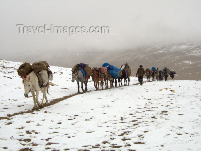 india343: India - Ladakh - Jammu and Kashmir: caravan in the snow - photos of Asia by Ade Summers - (c) Travel-Images.com - Stock Photography agency - Image Bank