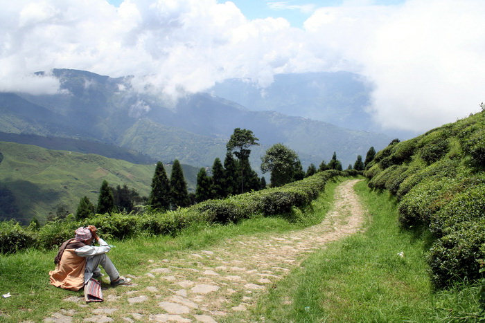 india397: India - West Bengal - Darjeeling: dirt road - photo by M.Wright - (c) Travel-Images.com - Stock Photography agency - Image Bank