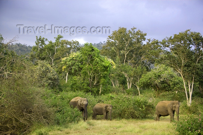 india427: Bandipur National Park, TN, India: Indian elephants in the jungle - photo by J.Cave - (c) Travel-Images.com - Stock Photography agency - Image Bank