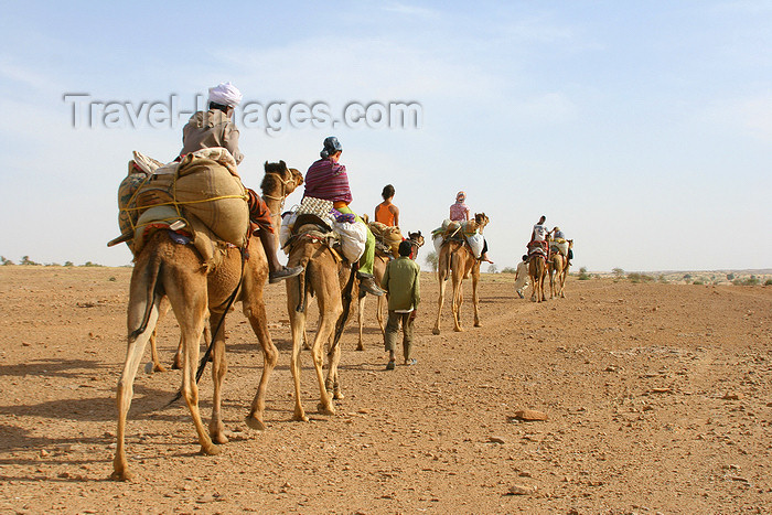 india461: Jaisalmer, Rajasthan, India: camel caravan in the deset - photo by M.Wright - (c) Travel-Images.com - Stock Photography agency - Image Bank