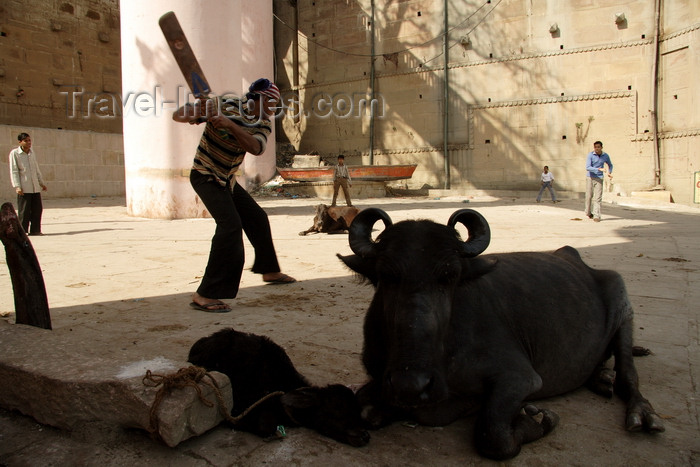 india483: Varanasi, Uttar Pradesh, India: cricket - sport - boys playing cricket while buffalos' are watching - photo by G.Koelman - (c) Travel-Images.com - Stock Photography agency - Image Bank