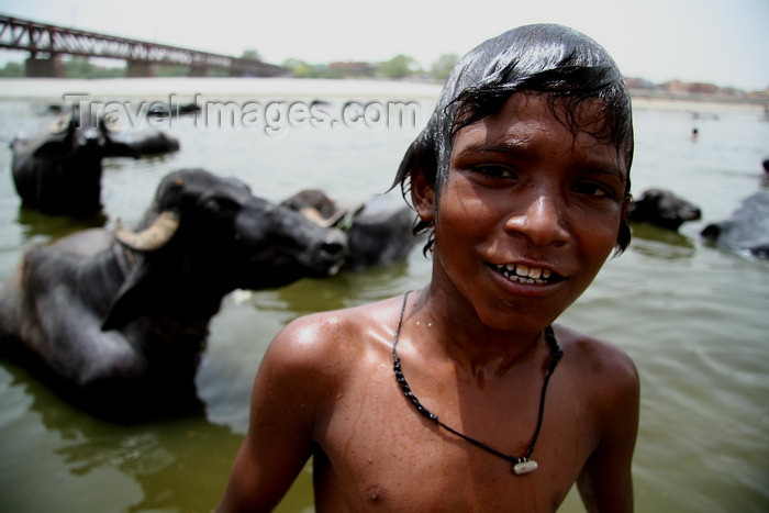 india486: Agra, Uttar Pradesh, India: boys playing in the Yamuna river - oxen - photo by G.Koelman - (c) Travel-Images.com - Stock Photography agency - Image Bank
