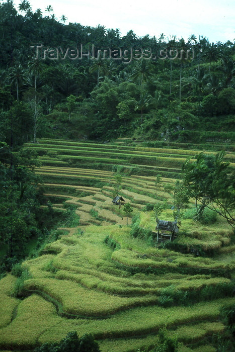 indonesia10: Indonesia - Bali: terraced rice fields (photo by Mona Sturges) - (c) Travel-Images.com - Stock Photography agency - Image Bank