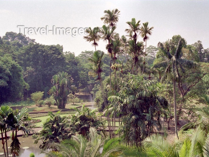 indonesia35: Java - Bogor, Indonesia: Botanical Gardens - photo by M.Bergsma - (c) Travel-Images.com - Stock Photography agency - Image Bank
