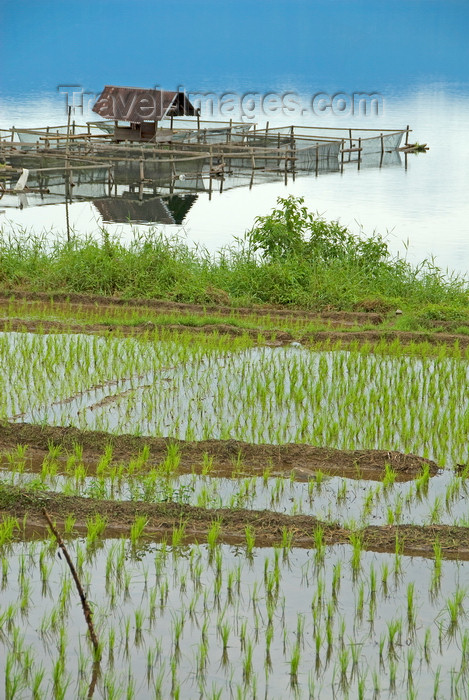 indonesia40: Indonesia - West Sumatra: Lake Maninjau / Danau Maninjau - fishing hut and rice field - photo by P.Jolivet - (c) Travel-Images.com - Stock Photography agency - Image Bank