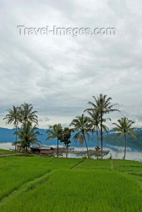 indonesia44: Indonesia - West Sumatra: Lake Maninjau - rice field - photo by P.Jolivet - (c) Travel-Images.com - Stock Photography agency - Image Bank