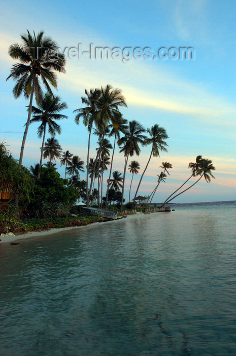 indonesia98: Pulau Tolandono, Wakatobi archipelago, Tukangbesi Islands, South East Sulawesi, Indonesia: sunset in Wakatobi - beach and coconut trees - Banda Sea - Wallacea - photo by D.Stephens - (c) Travel-Images.com - Stock Photography agency - Image Bank