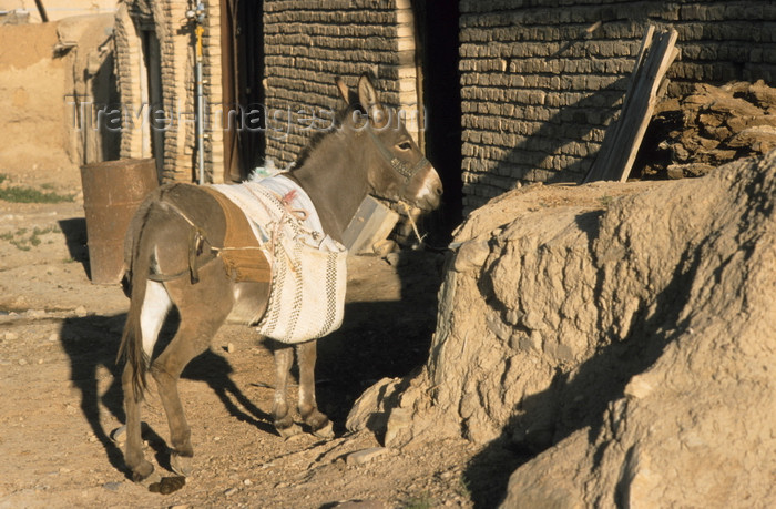 iran449: Iran: a donkey waits - equus asinus - photo by W.Allgower - (c) Travel-Images.com - Stock Photography agency - Image Bank