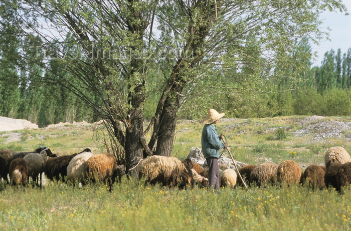 iran451: Iran - Zanjan province: shepherd with his flock - photo by W.Allgower - (c) Travel-Images.com - Stock Photography agency - Image Bank