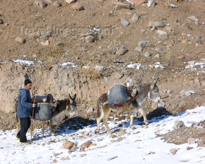 iran522: Kandovan, Osku - East Azerbaijan, Iran: farmer leading his donkeys uphill - photo by N.Mahmudova - (c) Travel-Images.com - Stock Photography agency - Image Bank