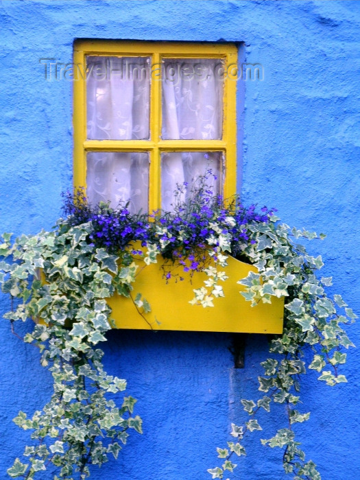 ireland54: Ireland - Kinsale (County cork): window with flower box - blue house (photo by R.Wallace) - (c) Travel-Images.com - Stock Photography agency - Image Bank