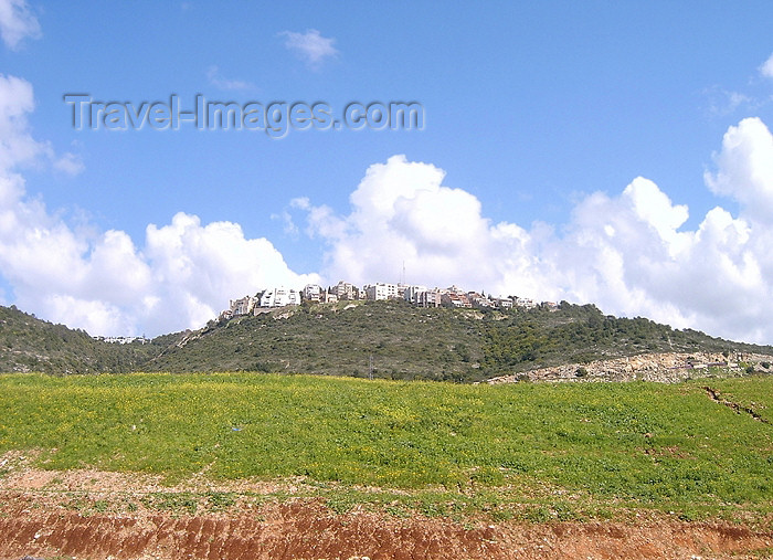 israel116: Haifa, Israel: green hills and suburbia - photo by E.Keren - (c) Travel-Images.com - Stock Photography agency - Image Bank