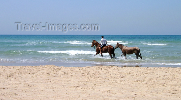 israel142: Israel - Kibbutz Sdot Yam: lone rider - horses - photo by Efi Keren - (c) Travel-Images.com - Stock Photography agency - Image Bank