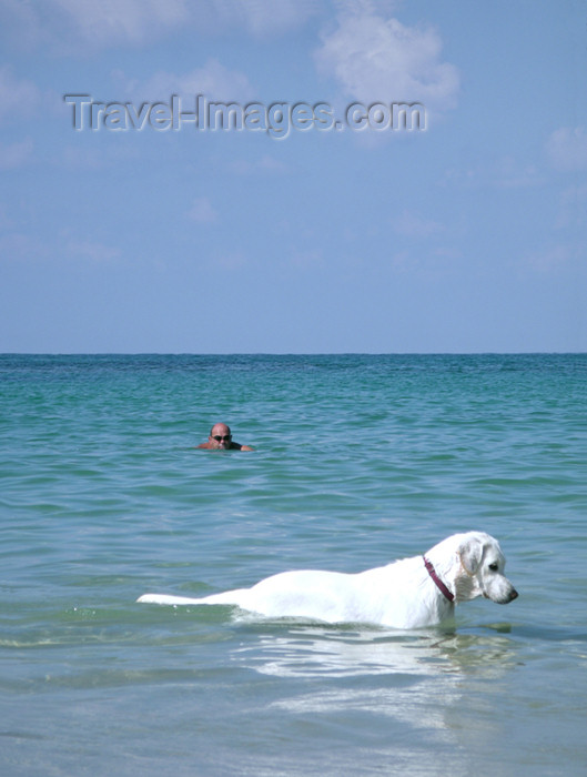 israel158: Israel - Kibbutz Sdot Yam: dog swimming in the sea - photo by Efi Keren - (c) Travel-Images.com - Stock Photography agency - Image Bank