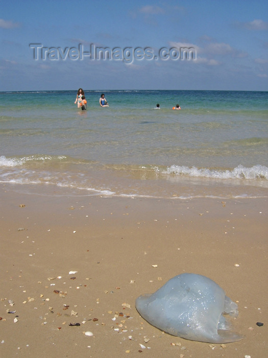 israel163: Israel - Kibbutz Sdot Yam: jellyfish on the sand - photo by Efi Keren - (c) Travel-Images.com - Stock Photography agency - Image Bank