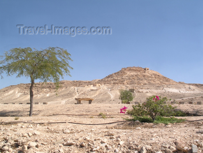 israel220: Israel - Negev desert: fragile life - photo by E.Keren - (c) Travel-Images.com - Stock Photography agency - Image Bank