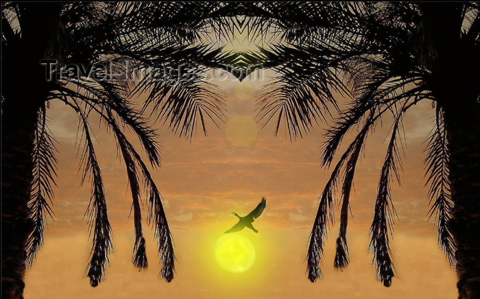 israel248: Eilat, Israel: palms at sunset - bird against the sun - photo by E.Keren - (c) Travel-Images.com - Stock Photography agency - Image Bank