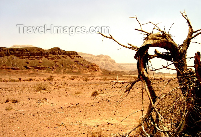 israel292: Israel - Eilat - Timna Valley Park: the power of the desert- photo by Efi Keren - (c) Travel-Images.com - Stock Photography agency - Image Bank