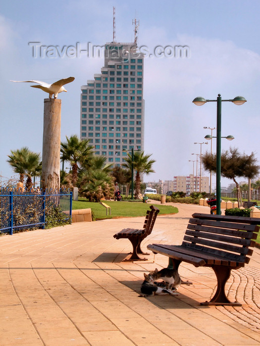 israel358: Netanya, Center district, Israel: waterfront promenade - benches and modern building - photo by E.Keren - (c) Travel-Images.com - Stock Photography agency - Image Bank