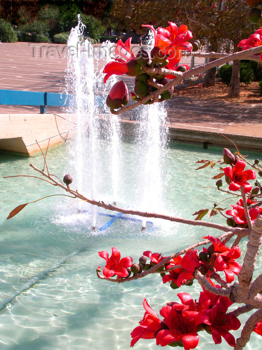 israel378: Tel Aviv, Israel: tree with red flowers and fountain at Rabin square - photo by E.Keren - (c) Travel-Images.com - Stock Photography agency - Image Bank