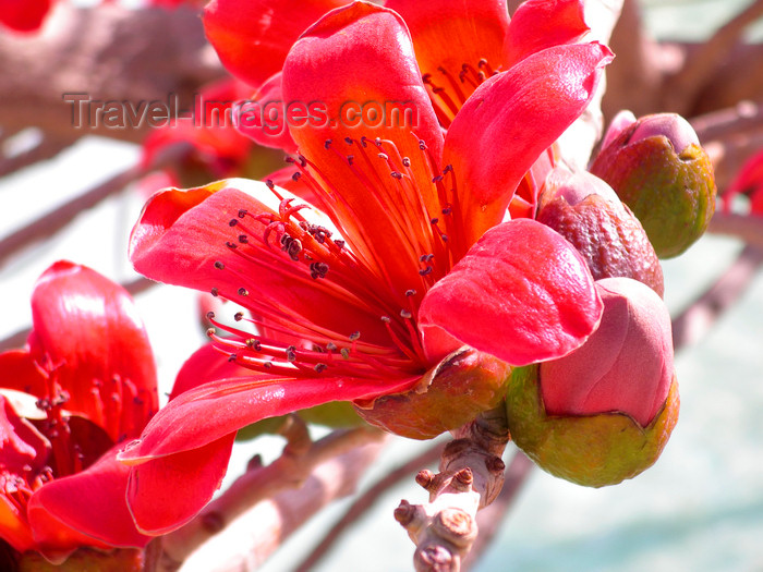 israel379: Tel Aviv, Israel: red flowers at Rabin square - photo by E.Keren - (c) Travel-Images.com - Stock Photography agency - Image Bank