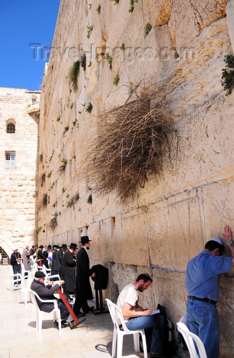 israel399: Jerusalem, Israel: locals and pilgrims pray at the men's section of the Wailing wall / Western Wall / the Kotel - muro das lamentações - Mur des Lamentations - Klagemauer - photo by M.Torres - (c) Travel-Images.com - Stock Photography agency - Image Bank